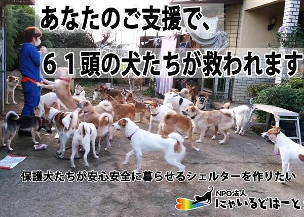多頭飼育崩壊の現場~残された61頭の犬たちのために、安全な保護施設を作りたい~