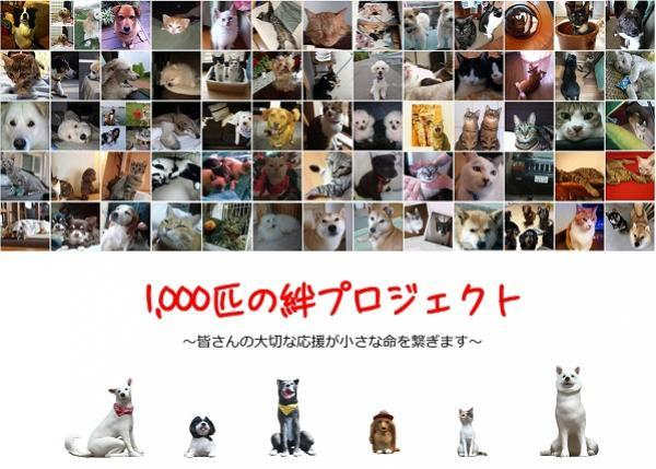 「1,000匹の絆プロジェクト」犬猫共生施設の実現への道