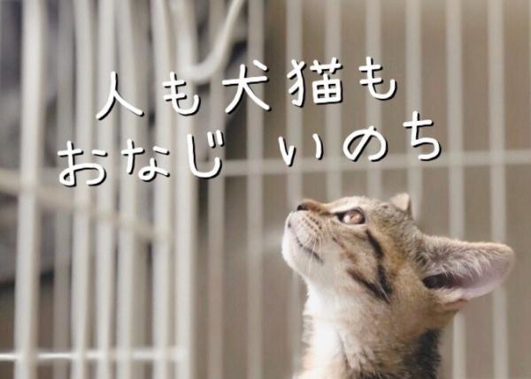 【犬猫施設『しっぽ村』移転プロジェクト】不幸な環境のもとで生きる命をゼロに!