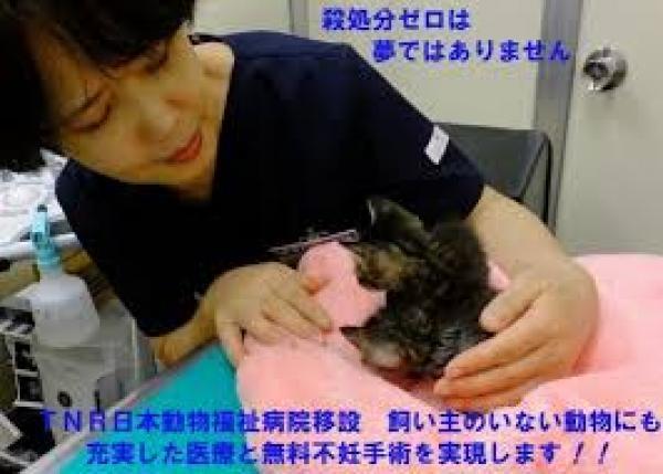 TNR日本動物福祉病院移設、飼主のいない 動物にも充実医療と無料不妊手術を!!