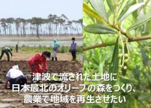 津波で流された土地に日本最北のオリーブの森をつくり、農業で地域を再生させたい