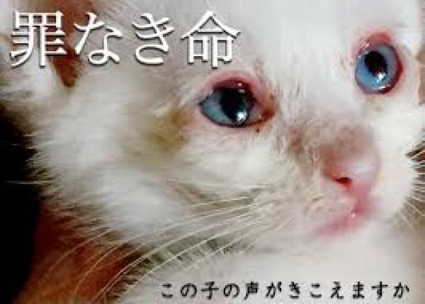 """「殺処分0」「野良猫0」へ!! 犬猫の不妊去勢手術""""無料""""病院を作る!!"""