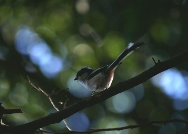バードウォッチング好きを応援「ウェルカム北海道野鳥倶楽部」を知ってもらいたい!