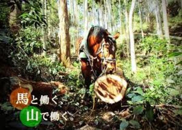 ばんえい競馬の引退馬を林業で再雇用! 馬を使った古くて新しい林業に挑戦したい。