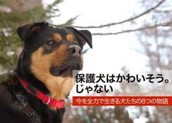 保護犬をモデルにした8つの物語を本にしたい。「保護犬は可哀そう」じゃない!
