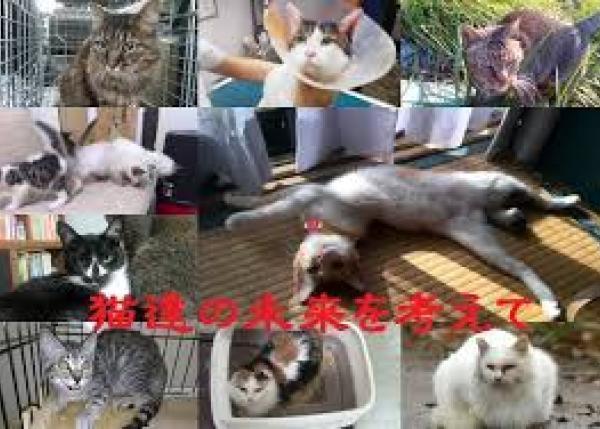 猫の命を救いたい!猫の避妊・去勢支援で新しい家族の元へ!