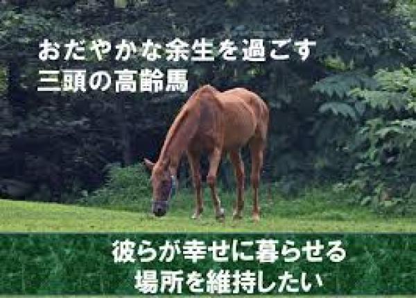 日本初の養老牧場が閉鎖!終の棲家に辿り着いた三頭の高齢馬を養育してあげたい