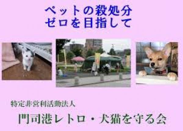 カフェ併設型保護猫シェルターPUSAの規模を拡大して、1匹でも多くの犬猫を保護したい