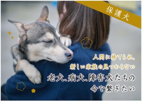 【保護犬】人間に捨てられ、新しい家族の見つからない老犬、病犬、障害犬たちの命を繋ぎたい