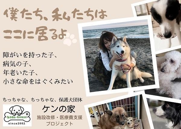 【ケンの家・施設改修/医療費支援プロジェクト】高齢、障がいをもった保護犬が十分な医療を受け、穏やかに過ごせるシェルターへ