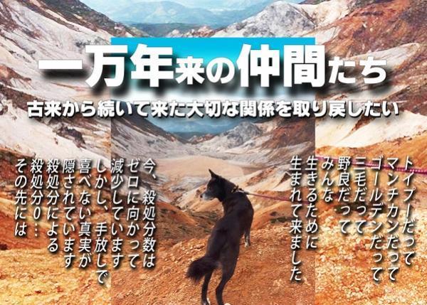 【1,000匹の絆プロジェクト 犬猫共生施設への道②】殺処分の無い日本を目指します。
